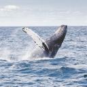 Dovolená u moře ve společnosti velryb? Navštivte země, které nabízejí velrybářské výpravy!