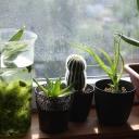 Jak s klidem odcestovat z bytu, když v něm máte živé pokojové rostliny?