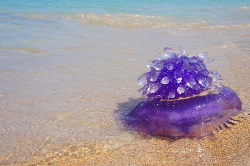 moře, medúza, cestování, mořský ježek