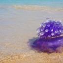 Jak u moře ošetřit kůži po setkání s medúzou nebo mořským ježkem?