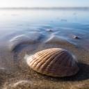 Přírodní nálezy z pláží mohou zkomplikovat odlety z dovolené
