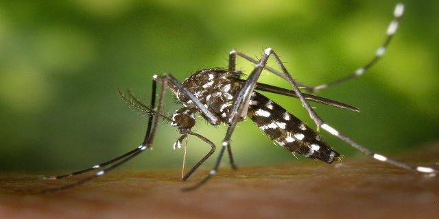 cestování, virus Zika, Amerika, Afrika, nemoci, nakažlivé choroby, ženy, těhotenství