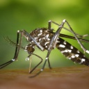 Virus Zika nemá vliv na turistiku