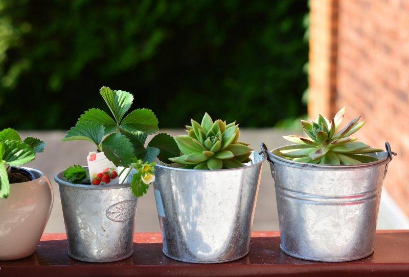 zdraví, alergie, pyl, zeleň arostliny