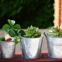 Co pěstovat na balkoně, když máte doma alergika na pyl?