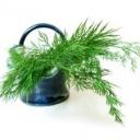 Jak na bylinky, rostlinky a jejich využití?