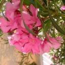 Jaké květiny jsou vhodné na balkon a terasu?