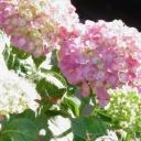 Jaké květy na stěny?