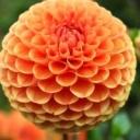 Jak se na zahradě těšit z pestré krásy?