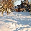 Proč pěstovat čemeřici královnu zimy?