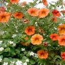 Jaké jsou novinky na trhu do zahrady?