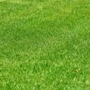 Jak založit trávník?