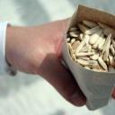 Jak ošetřit semena před setím?