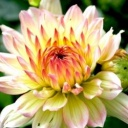 Jaké květy můzeme mít na zahradě na podzim?