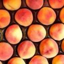 Jaké je tajemství bohaté úrody broskví?