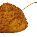 Co se spadaným listím a jehličím?