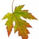 Co dělat na zahradě, když se hlásí podzim?