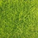 Jak mít pěkný trávník do jara?