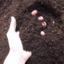 Jak si otestovat půdu?