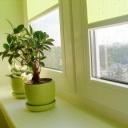 Jak správně hnojit pokojové rostliny?