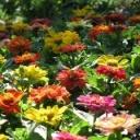 Jaké jsou nejčastější chyby při hnojení?