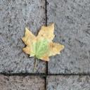 Jaké jsou typy podlahových dlaždic?