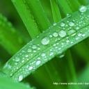 Jak na vodu a zeleň v našem okolí?