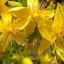 Jaké bylinky se hodí v létě?