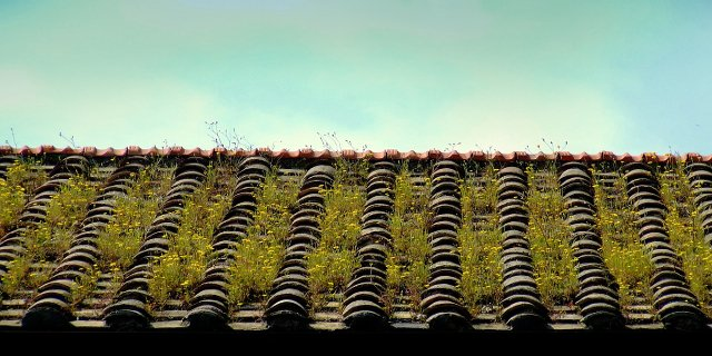 střecha, zdraví, ekologie, zelená střecha