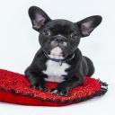 Letecká doprava neumožňuje přepravu zvířecích mazlíčků na palubě, výjimkou jsou vodící psi