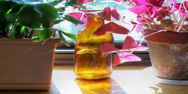rostliny vbytě, zdraví