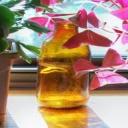 Rostliny v obývacím pokoji