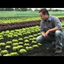 Ovoce a zelenina nejvyšší kvality - video