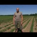 Pěstování cibule - video
