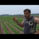 Pěstování mrkve - video