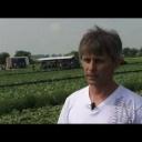 Pěstování salátu - video