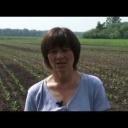Pěstování zelí - video