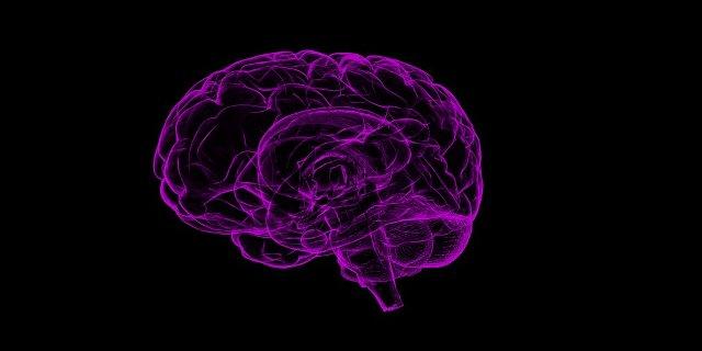 déjà vu , mozek, paměť, vzpomínky
