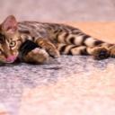 Podlahové topení je vhodné také pro alergiky