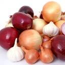 Cibule, pórek, pažitka a česnek - silná čtyřka, která se postará o vaše zdraví