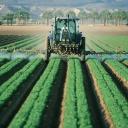 Jak zbavit přírodní cestou ovoce a zeleninu nebezpečných pesticidů?