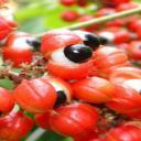 Káva nebo guarana? Zkuste si vybrat to zdravější!