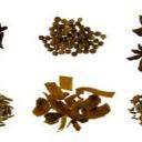 Léčba přírodními prostředky při napadení těla parazity