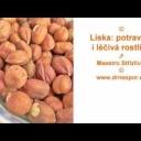 Líska: skvělá potravina i léčivá rostlina - video