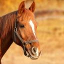 Matrace z koňských žíní zajistí klidný spánek v suchu a bez dráždivých alergenů