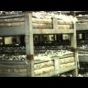 Pěstování a využití hub, hřibů - video