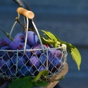 Švestky - lokální ovoce s fantastickými zdravotními účinky