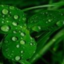 Zelená je dobrá - jetel nejen pro štěstí
