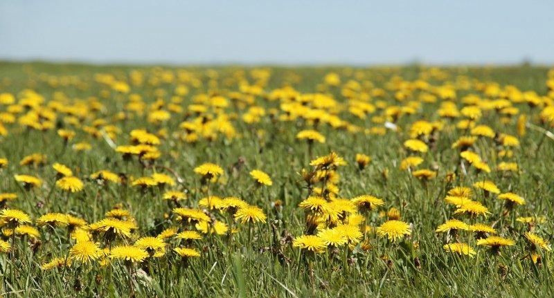 bylinky, zelený detox, zdraví