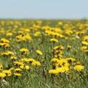 Zelený detox zve k procházkám jarní přirodou